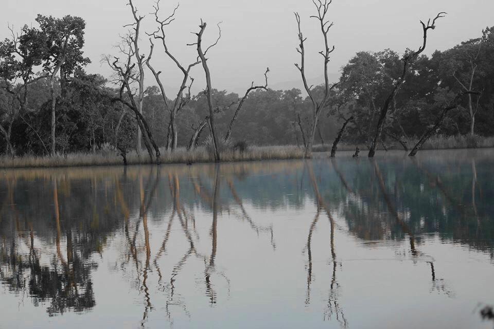 #chitwan_national_park