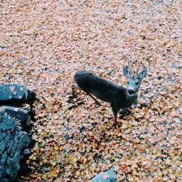 autumn warm deer baby