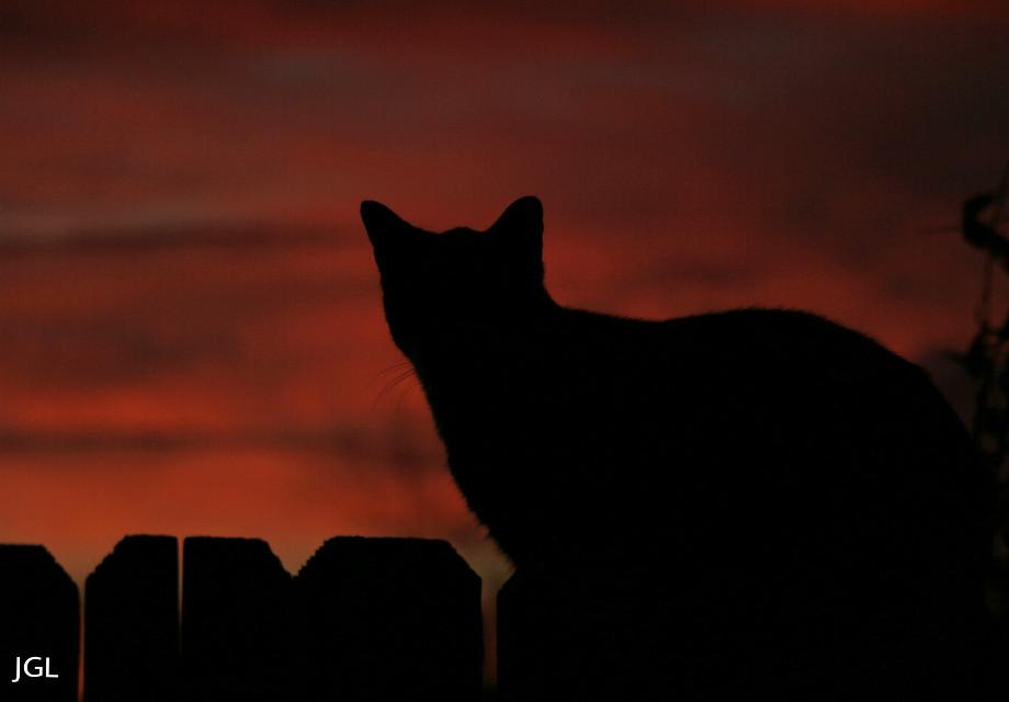 #cat #petsandanimals  #sunsetsilhouette