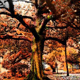 wapautumn myview photography colorful tree