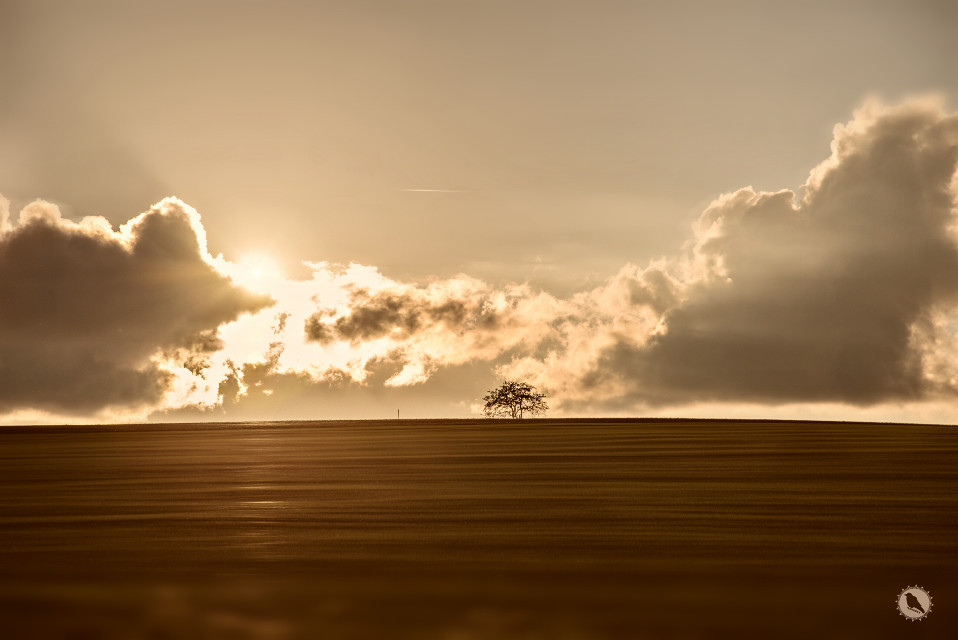 The sound when the sun is going down.  #landscape #sunset #tree #nature