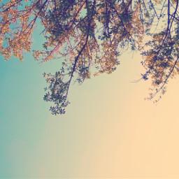 nature tree sky natureza nokialumia