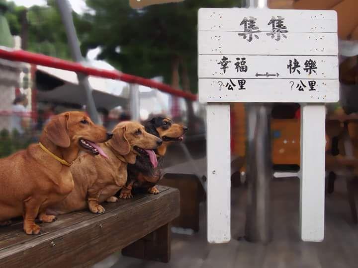 #cute #photography #travel #dog