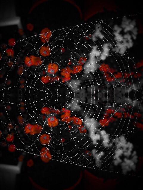Good Morning  #spiderweb #mirrored