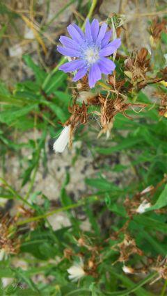 flower summer macro photography lgg2mini