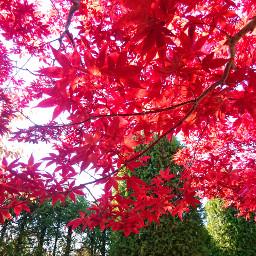japan h hokkaido sapporo autumn