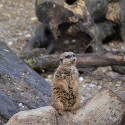 inthezoo zoo animal meerkat zoobasel