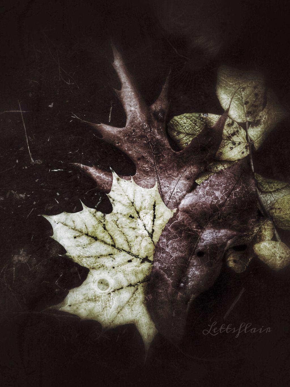 Seasons come and seasons go!  Raking leaves!!  #texture #grunge #leaves #fall #seasons  #autumn #autumnleaves