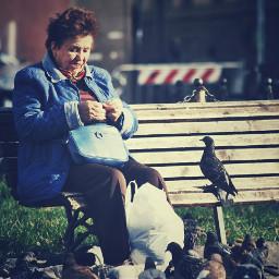 people emotions autumn streetphotography birds