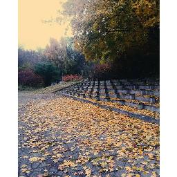 autumn autumnleaves leaves