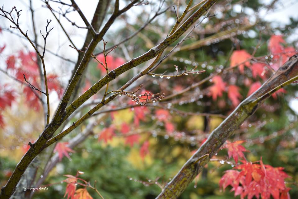 #season #Autumn rain