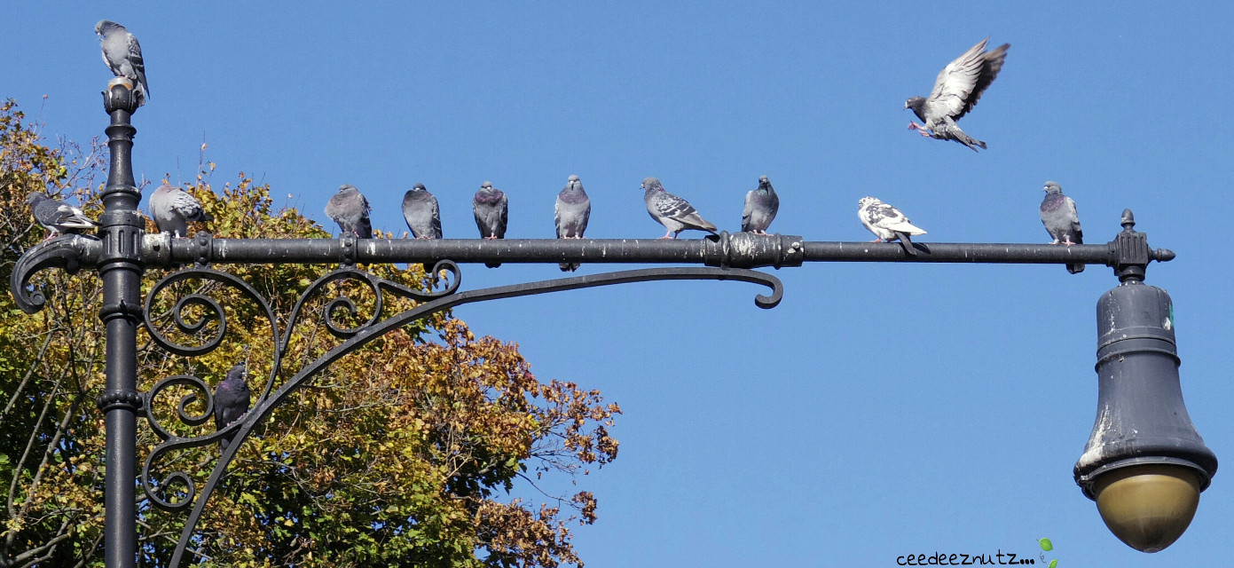 Outta my way! #nature #photography #petsandanimals #fall #birds