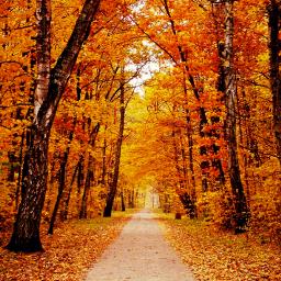 autumn leaves vibranteffect nature