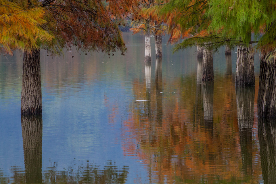 #nature #scenery #reflection #trees