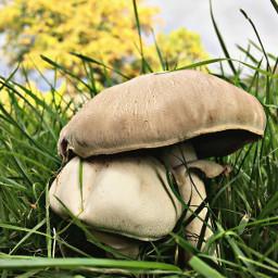 fungus interesting colorful autumn