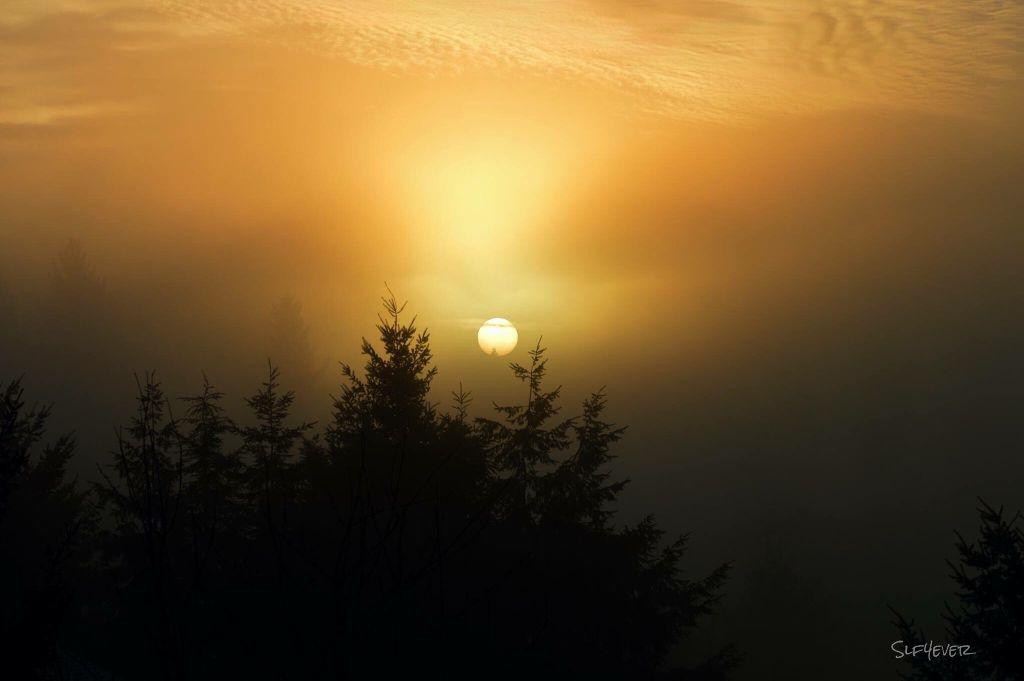 #washington #foggymorning  #sunrise