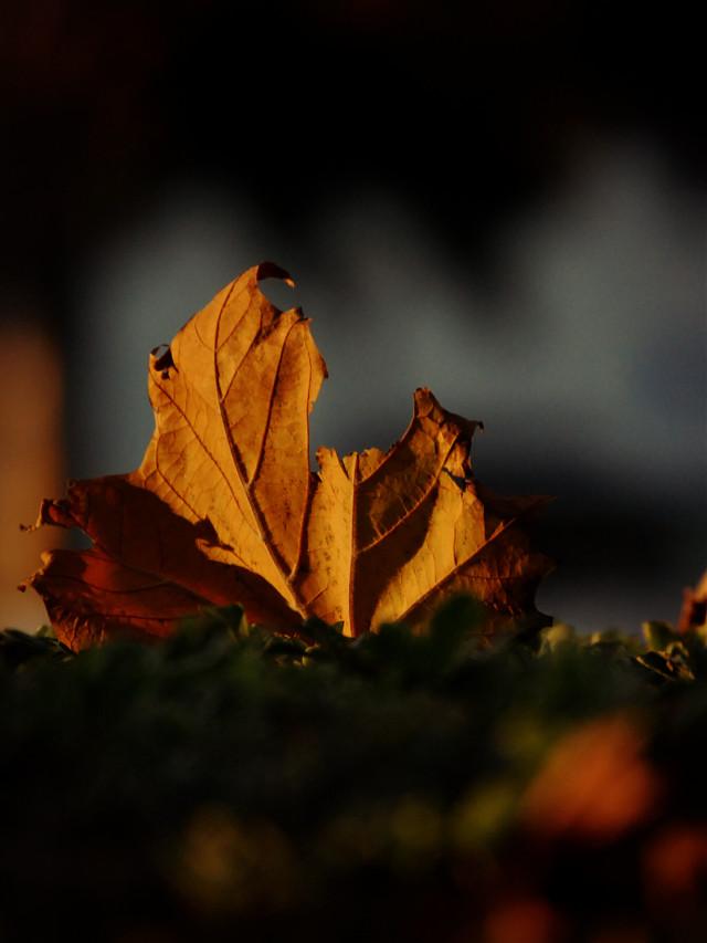 #fall #photography
