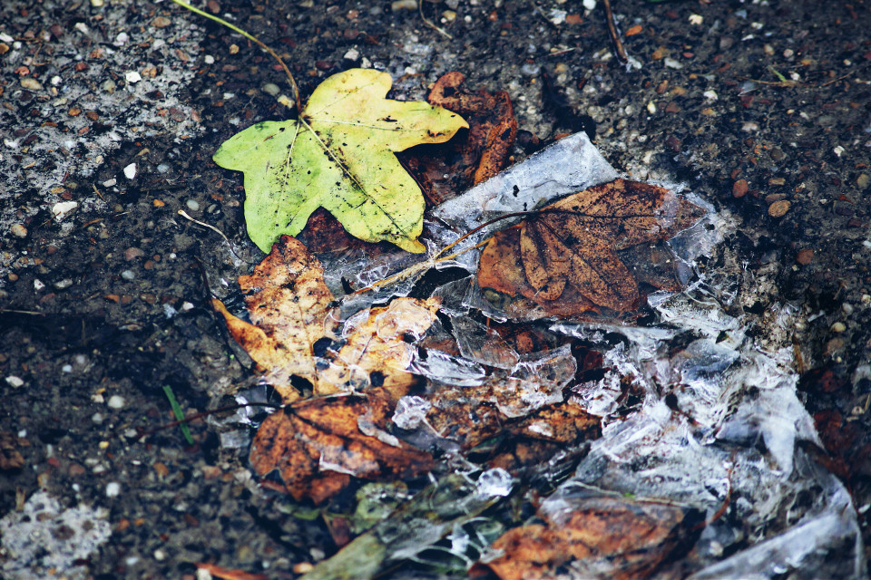 I took this on Sunday morning when there was the first frost this year for me #fall #autum #leaves #ice #puddle #hdr #do #dodger #photography