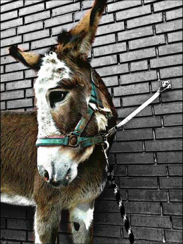 #mydonkey #drawing #ColorSplash #donkey #love #cute #pets #petsandanimals #mina