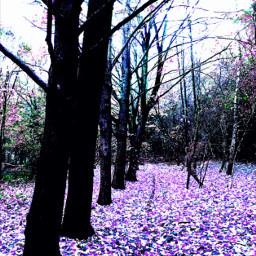 autumn colorsplash trees leaves