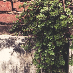 plant plants photography green freetoedit