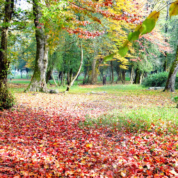 autumn colorful photography travel