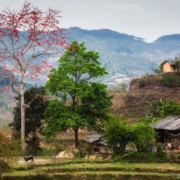 landscape calm bombax vietnam