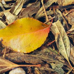 colorsplash deadleaves colddays lookdown ground