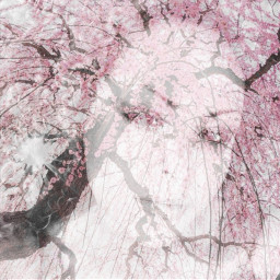emotions nature cherryblosoms photography doubleexposure wapflowerportrait