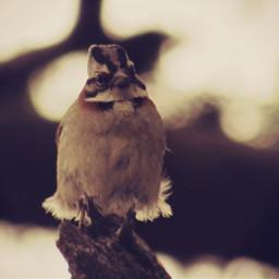 cute petsandanimals photography nature