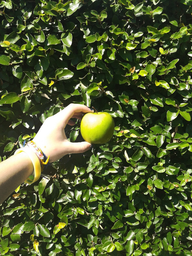 Manzana verde #photography #green #tengounapicaduraenlamano #fruit #vsco #vscoarg #vscoargentina #vscocam #argentina #plant #nature #hand #leaf  #colorful #summer