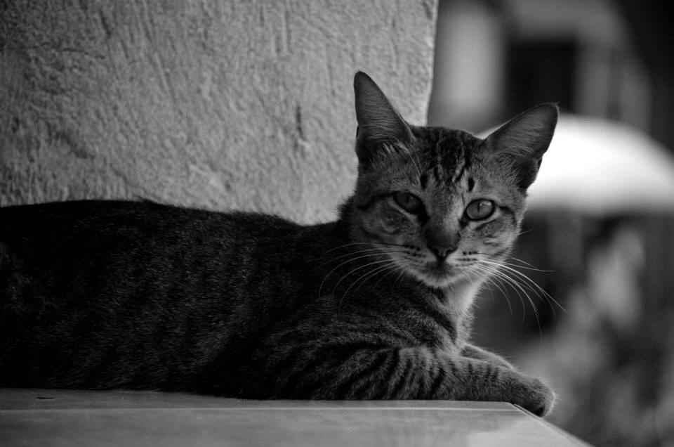 #monochromephotography #cat