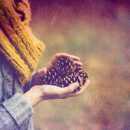 photography winterseason pinecone colddays scarf