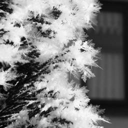 snow winter ice crystals grey