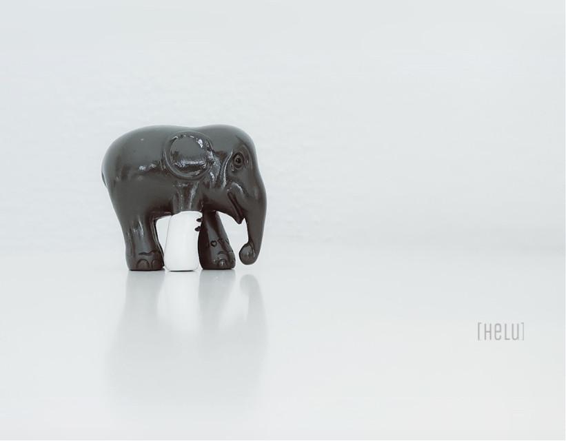 ... again my elephant for #keepitsimple   #dailyinspiration #exposure #minimalism #lessismore