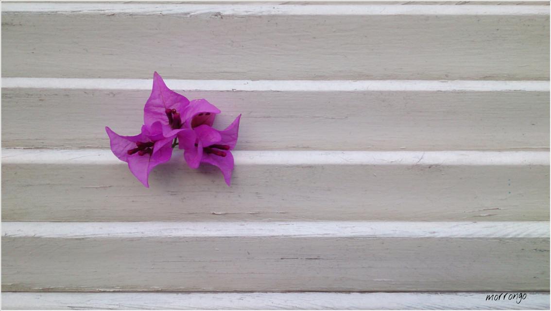 #keepitsimple #flower #emotions #freetoedit #White #purple