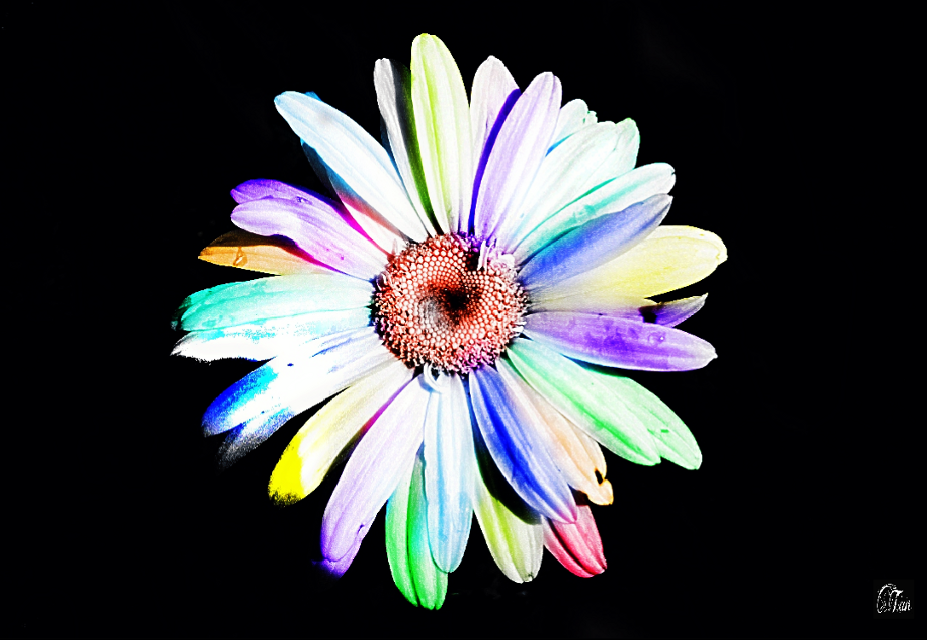 #art #colorplay #flower #black #photography
