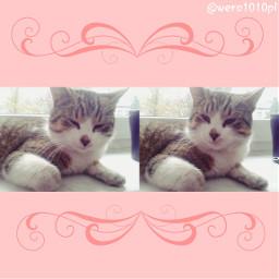 cat mycat kitty polishcat cute