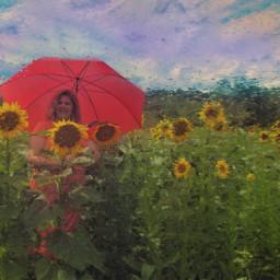 umbrella umbrellas sunflwoers rain red