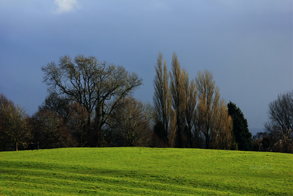 #photography #nature #countryside #landscape #field #trees