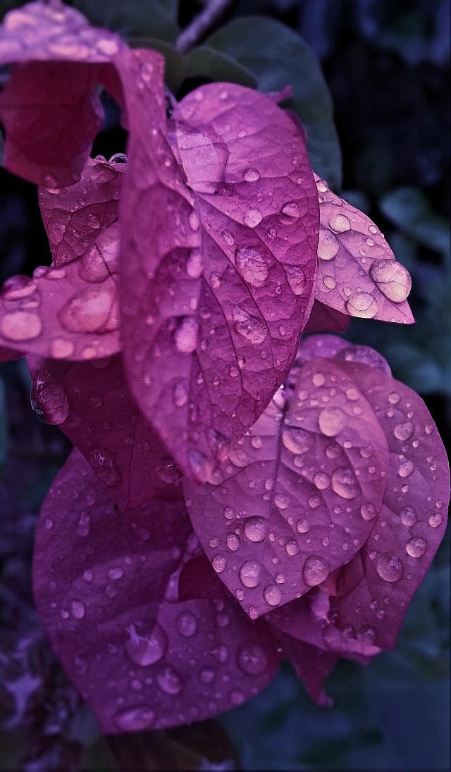 #nature#rain drops#flowers#