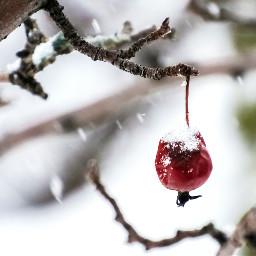 macro dried ornamental cherry freetoedit