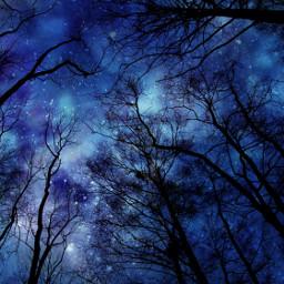 music trees constellations nature repost