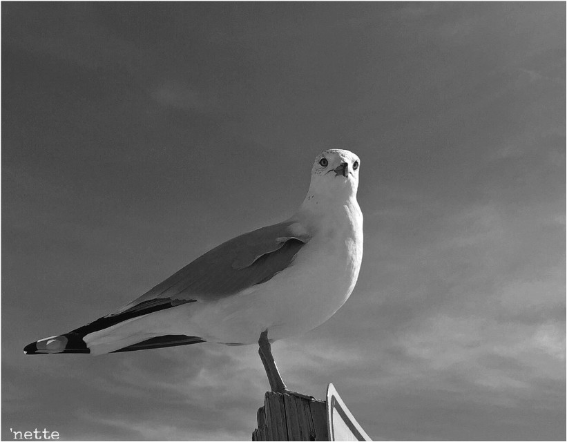 good morning my friends! 😊☕️🌤 happy wednesday!  #seagull #beach #assateague