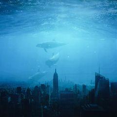showmethesea wapshowmethesea surreal surrealistgate underwater