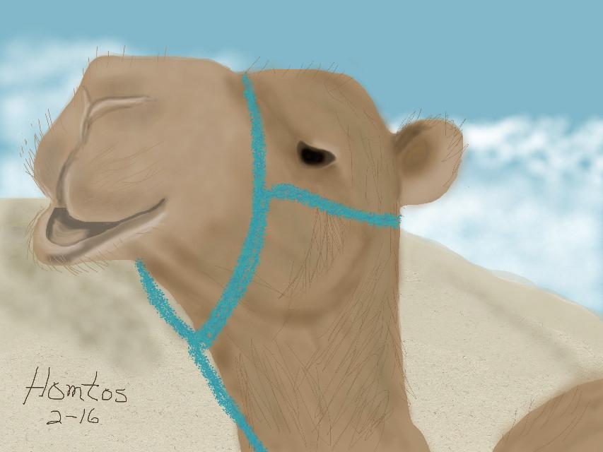 """C"" is for Camel, ref - animaliaz-life.com #animal #camel #desert #wdpfunnycharacter"