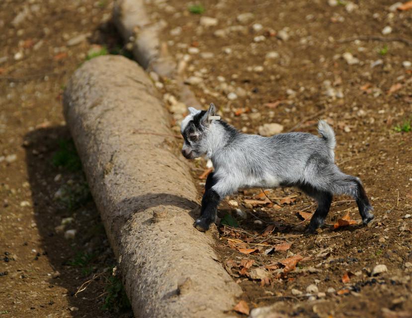 #photography #petsandanimals #nature #freetoedit #zoo #cute