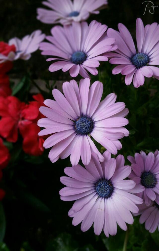 #flowerarrangement #flower #flowers #nature