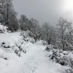 winter woods snowland tracks