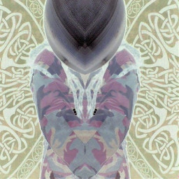 stigarta moth